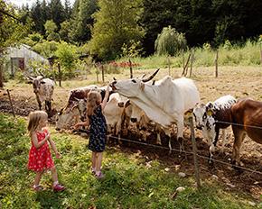 Kinder bei den Zebu Rindern